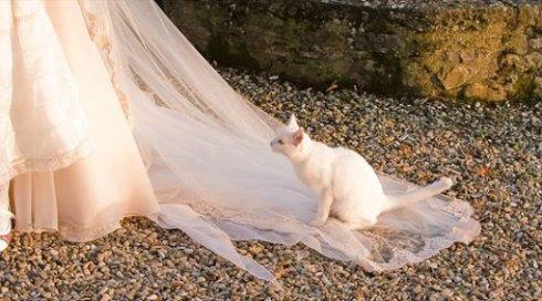 cat_on_bridal_train