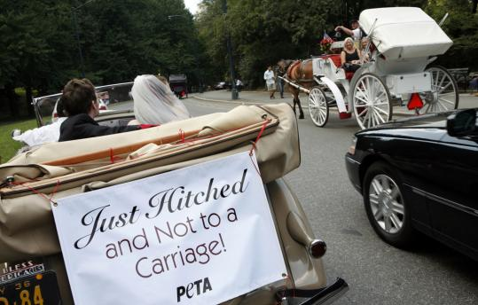 peta carriage horses