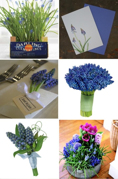 wedding flowers centerpieces. grape hyacinth wedding bouquet